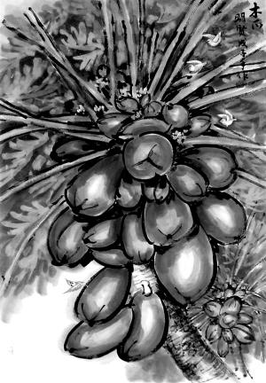 海南热带水果———木瓜