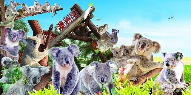 广州长隆野生动物世界是人与野生动物亲近交流的最佳