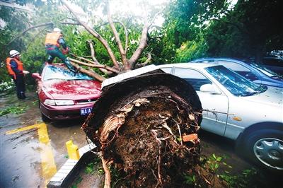 7月19日,海口中山路,消防官兵在锯树木的残枝.本报记者 张茂 摄