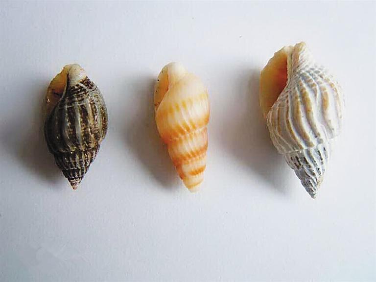 动物 海底 软体 768_576