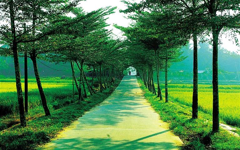 海南三亚绿色风景图片
