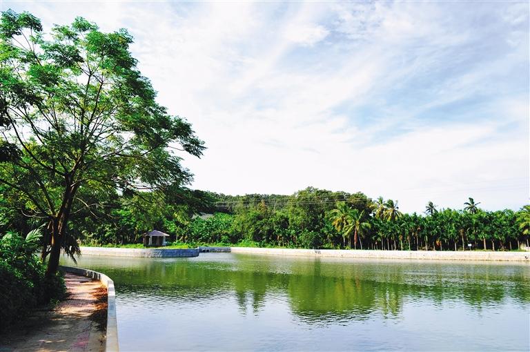 风景如画的美丽乡村万宁市龙滚镇福塘村. 谷歌 摄