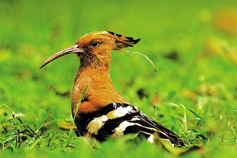 鸟翔鱼戏:红树林里的精灵