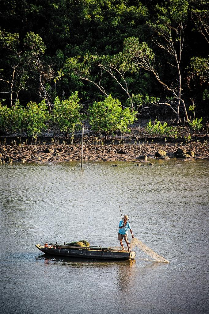 -->  清晨,在渔夫的橹拨水声中,体型强壮的游隼在空中表演飞行特技,嘴尖如长针的绿鹭在滩涂上寻觅早餐,招潮蟹开合大鳌发出咔哒声做法招来潮水当然,除了这些天上飞的、滩涂中爬的,在东寨港红树林中,还有一群生活在滩涂及水体底部的动物群落,它们被统称为底栖动物。   专家介绍,大型底栖动物是红树林生态系统中的重要组成部分,同时也是该系统物质循环、能力流传中积极的消费者和转移者。据调查,东寨港红树林底栖动物主要有软体动物、环节动物、星虫动物、节肢动物、鱼类等。   2009年3月-12月,海南
