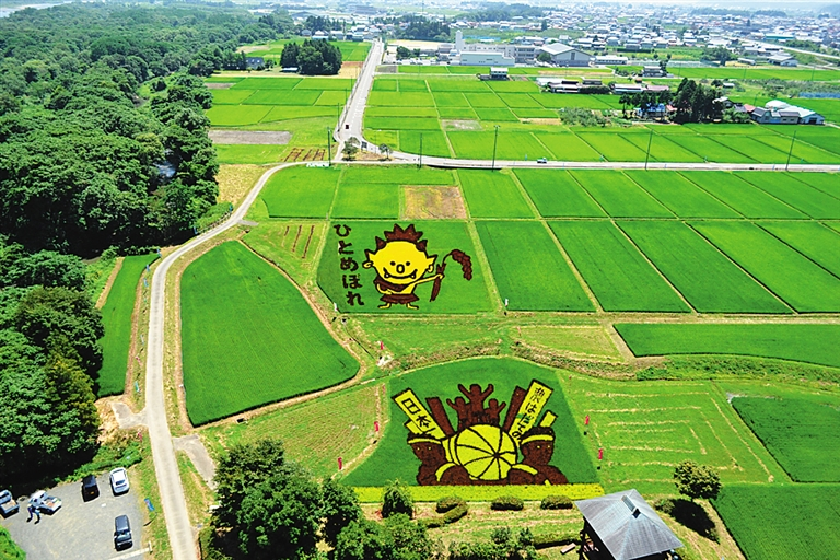 日本大地艺术节_麦田怪圈,油菜花田,稻田画—— 大地艺术的创意与生存