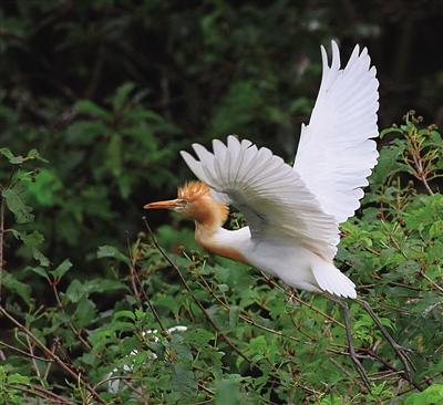天空有白鹭的翅膀