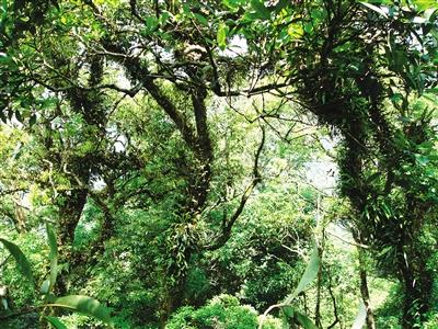 海南风景题材树根油画