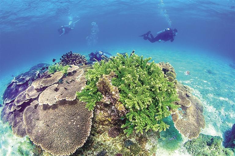 分界洲岛海底美丽的珊瑚.  武昊 摄