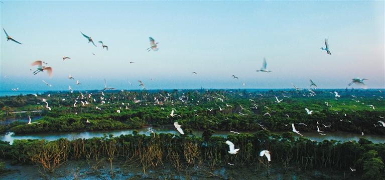 白鹭风景图片大全