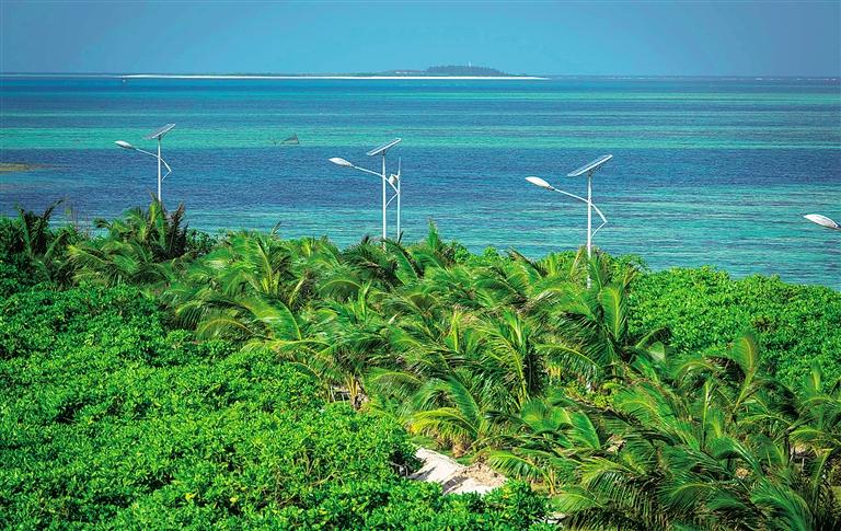 三沙市赵述岛环岛路,新种的椰子树长势喜人,远处曾经没有一棵树的西
