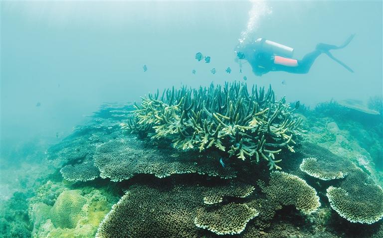 分界洲岛珊瑚礁:从伤痕累累到繁荣绚丽