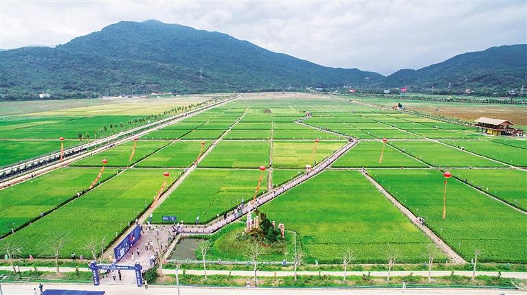 三亚海棠湾水稻国家公园. 本报记者 武威 摄
