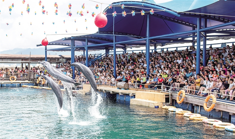 7月9日,陵水黎族自治县分界洲岛旅游区海洋剧场,海豚表演吸引了众多