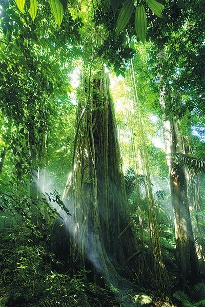 昌江:一座雨林孕育一种文化