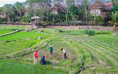 海南日报数字报-清新山村田园味 玩赏美景习耕种