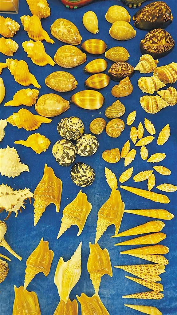 海南民间首次举办国际贝展 贝壳世界原来这么好玩