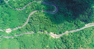 公路穿林过 绿意漫琼岛