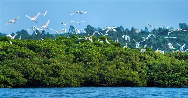 海南省代表委员围绕生态文明建设建言献策