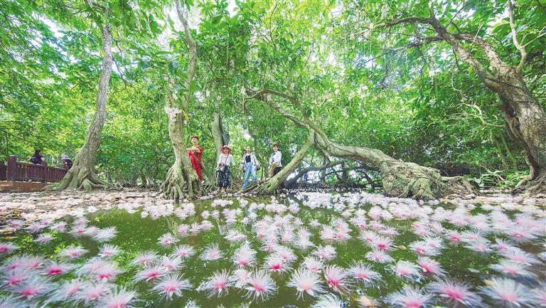 端午节假期,儋州市民和游客游花海、听涛声、看表演、尝小吃