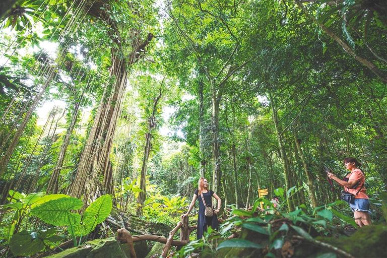 海南热带雨林国家公园体制试点看点多—— 绿染山川千层翠