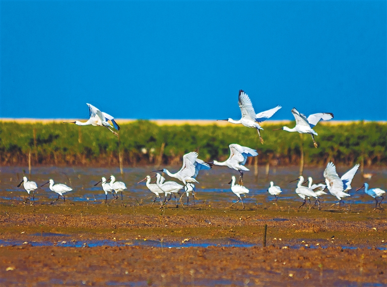 东方四必湾湿地被列入国家重要湿地名录