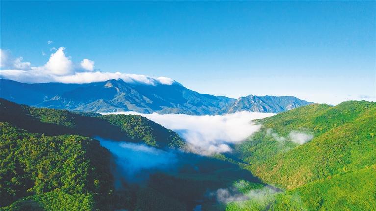 海南热带雨林生态廊道初步形成