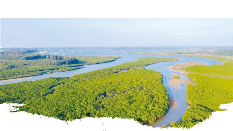 """""""失地""""变湿地 红树渐成林"""