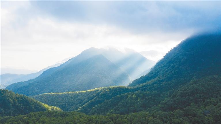 """海南热带雨林国家公园加快核算生态系统生产总值,摸清""""绿色家底"""""""