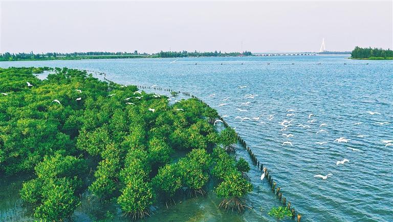 海南:绿色底蕴映初心
